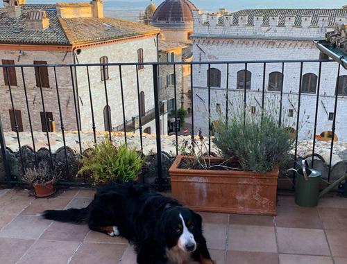 Appartamenti nel cuore di Assisi, sulla Piazza del Comune, terrazza e vista meravigliosa, cani benvenuti!